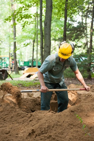 Learn if it's okay to plant a tree in the same spot where an old one was just removed. And also learn how close can you plant a tree to a stump and if its ok to plant a new tree over ground out stump.