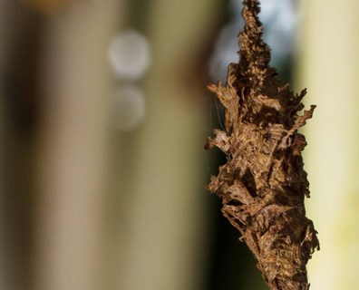 Bagworms: Are They Harmful and How Can I Get Rid of Them