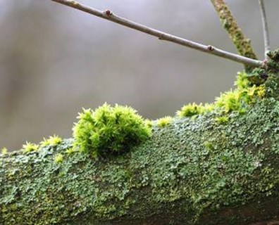 Green spots on tree trunk or branches? Learn how to identify fungus on your tree and how to treat it.