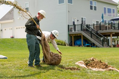 Learn how much landscapers charge to plant a tree and what factors determine tree and plant installation price.