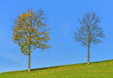 Wondering why your trees may be losing their leaves too early in summer or early fall? Well...