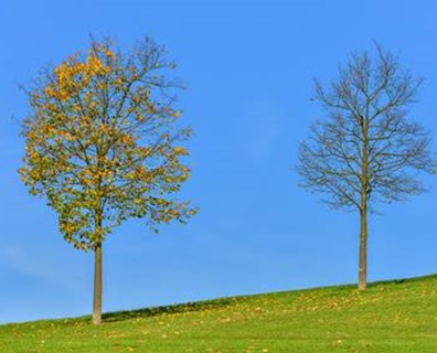 Why Are Trees Losing Leaves In June August Or Early Fall Davey Blog