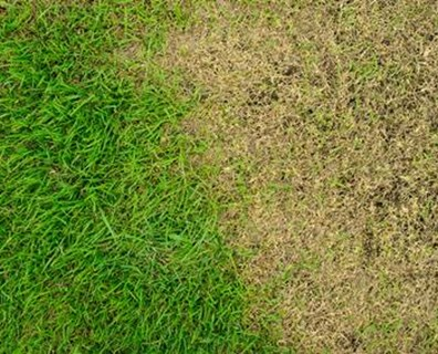 What to do with areas of your yard where grass won't grow.