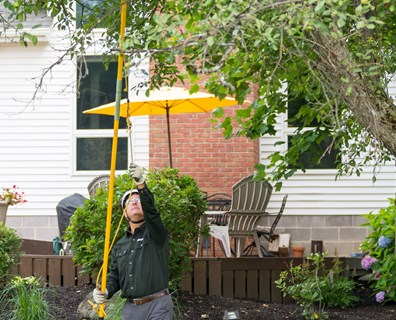 Curious about pruning your trees in the summer? Learn the do's and don'ts of summer pruning.