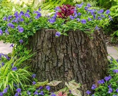 Not sure what to do with the tree stump in your yard? Learn creative ways to hide your tree stump