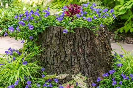 Not Sure What To Do With The Tree Stump In Your Yard? Learn Creative Ways