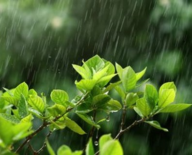 Find out if tree leaves turn upside down or show undersides before rain!