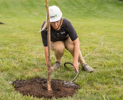 Here, an arborist waters a new tree so that it can build a strong foundation. Find out how much water your newly-planted tree needs here.