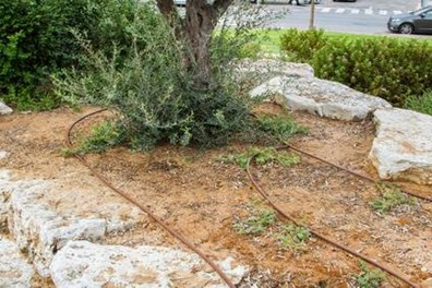 Learn how to water trees and shrubs with a drip irrigation system.