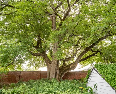 Want a strong, healthy tree like this beauty? Use these six care tips to make your tree healthy!