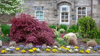 Best Dwarf Trees For Small Space Landscaping Flowering And More
