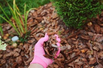 Should I mulch in spring, fall or before winter? Read on to find the right time to add mulch to your garden bed.