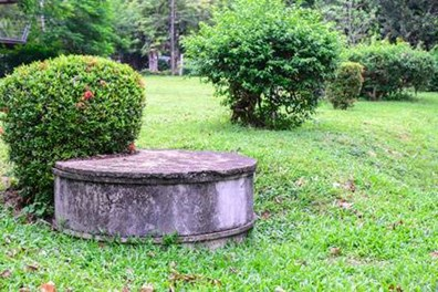 Looking for landscaping ideas around your septic tank system? Click here to learn what trees, shrubs and flowers to plant.