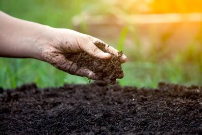 Grab a handful of soil and perform a soil test.
