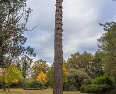 If you have an over-pruned tree or shrub that you cut all the branches off of, will it grow back?