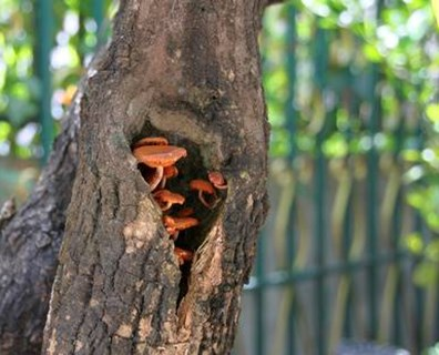 If you see your tree rotting at the base, spot a hole or mushrooms, what should you do?