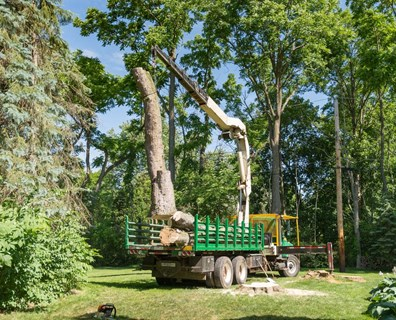 When is the best time to have a Davey arborist remove your tree?