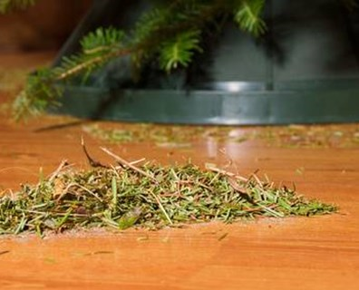 Tired of stepping on those fallen, prickly Christmas needles? Try this.