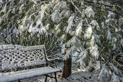 Learn how to tell if its OK to plant in winter or if you should wait for a more suitable season.