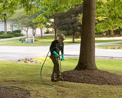 At Davey, we use the best fertilizer for trees - Arbor Green PRO®.