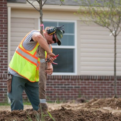 Find out the best time to remove tree wrap or tree guards after the winter season.
