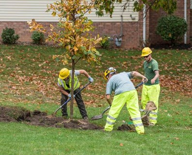 Learn how to plant any tree using Davey Tree's step by step instructions.