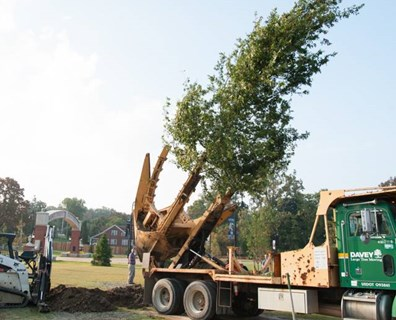 Tree Transplanting Cost for Big and Small Trees | Davey Blog