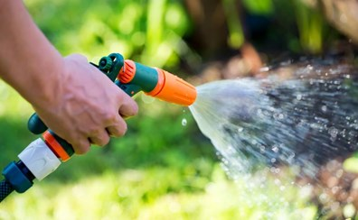 Learn when you should start watering your trees in the spring