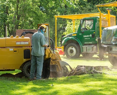 Is Tree Stump Removal Necessary, Or Is It Better To Grind A Stump?
