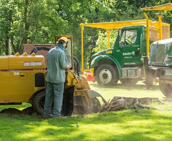 Is Tree Stump Removal Necessary, Or Is It Better To Grind A