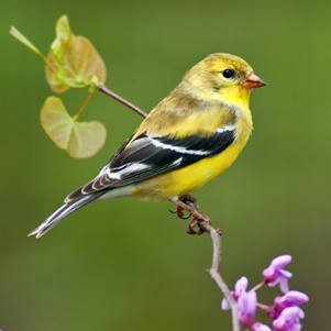 Featured image for Spring Feeders