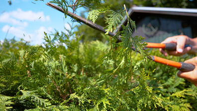 From pinching to pruning to heading to shearing, no two cuts are the same, and each technique gives our plants a distinct look and feel.  learn which is best for your plant.