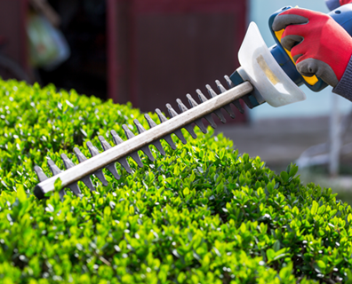 Picking a tool to use to trim your trees