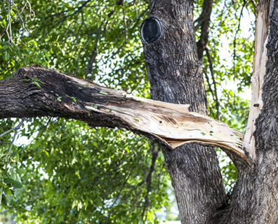 Lightning Damage to tree