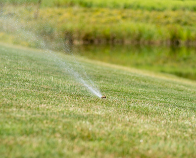 Find out the best time and how much water your trees and lawn need.