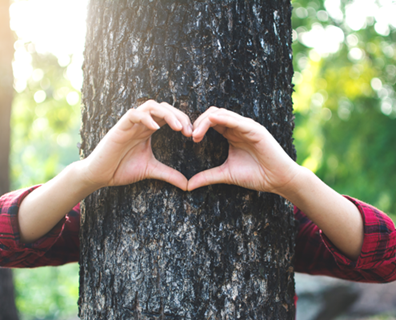 Memorialize A Beloved Tree You Have To Remove