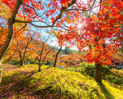 Travelers seek the most scenic locations to view the best of fall foliage every year. | Photo: Yuguesh Fagoonee - Fotolia.com