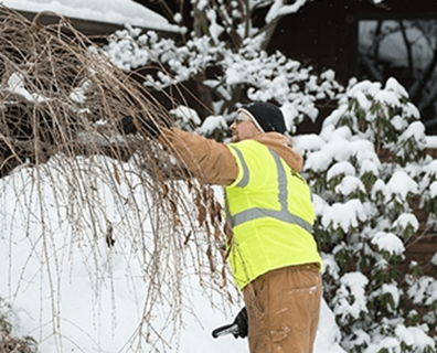 Mistakes Prepping Trees For Winter
