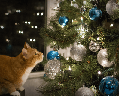 Featured image for Cat Proof Christmas Tree Ideas and Tips