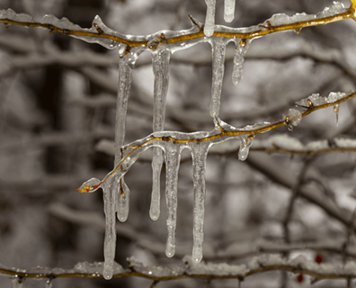 Featured image for How to Get Ice Off Trees and Shrubs