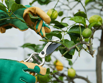 Featured image for How To Care For Fruit Trees In Early Spring