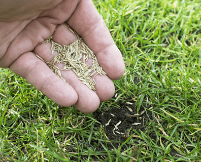 Featured image for Can I Plant Grass Seed in April?