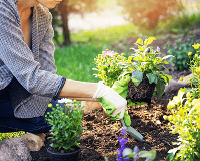 Featured image for Garden Tips: How to Select, Arrange, and Plant Flowers in a Flower Bed