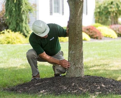 Featured image for Fact or Fiction: Five Ways You May Be Harming Your Trees