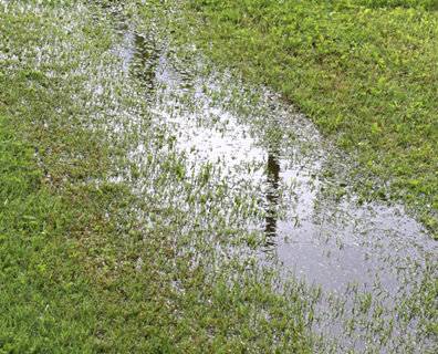 Featured image for Thirsty Plants: Which Plants Absorb Excess Water in a Yard?