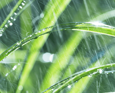 Featured image for Can Too Much Rain Hurt Your Lawn?