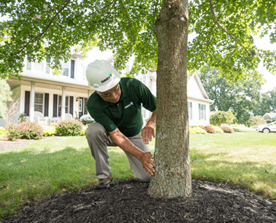 Proper tree care and maintenance takes knowledge and expertise—two qualities that are top of mind for Davey Tree professionals.