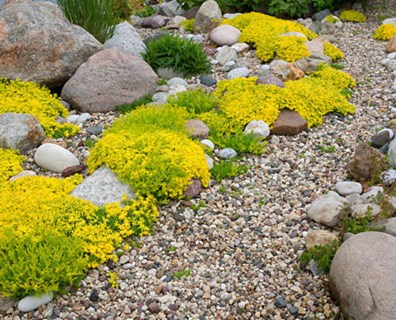 Featured image for Landscaping in Rocky Soil