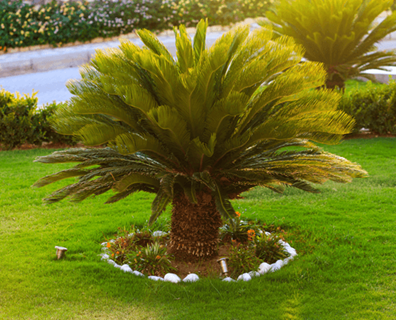 Featured image for What Type of Palm Tree Do I Have?