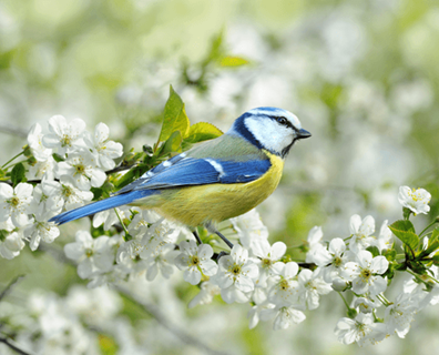 Featured image for Best Trees and Plants for Bird Lovers